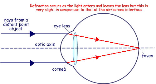 A cyberphysics page diagram represents a simplified version of a normal eye with no sight defects looking at a distant point object complete the paths of the two rays ccuart Choice Image